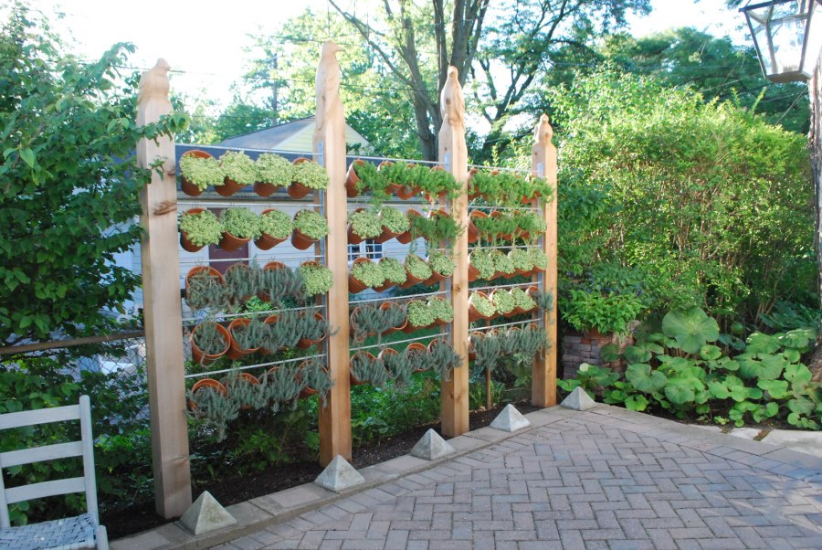 Fascinating Good Plants For Privacy Screen Ideas - Best idea home ...